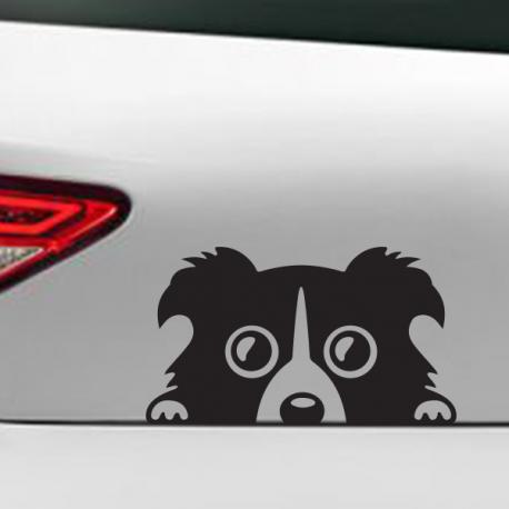Tête de chien berger australien sticker voiture